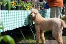 Sunshine and her owner Kathryn Mikoski take time to smell the flowers