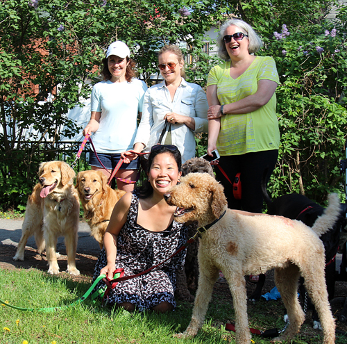 Some of the dog walkers at Fisher Park: Kim Pilon with Libby, Audra Curley with Nahla, Yuri Cho with Louie, and Hilary McVey with Annabelle. Photo by Andrea Cranfield
